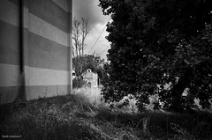 (Davide Castiglione) Tags: abandoned church costruction building edificio incomplete addolorata chiesa albero tree trunk branches old boughs black white wall land sky cloudly leaves mount grove light shadows sharpness