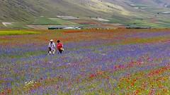 passeggiando (Fr@tes) Tags: castellucciodinorcia castelluccio colori colors explore canon eos fioritura