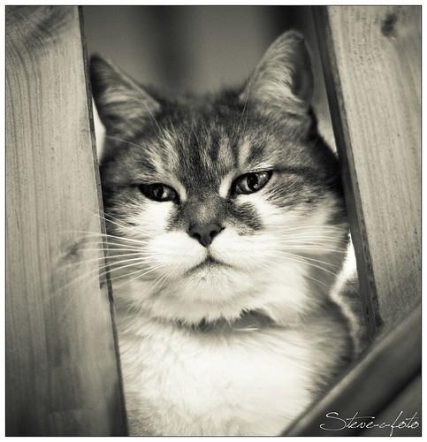 Dame Poupette - Steve.© -
