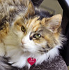 "Pet of The Week: Penny • <a style=""font-size:0.8em;"" href=""http://www.flickr.com/photos/42888877@N06/8602951874/"" target=""_blank"">View on Flickr</a>"