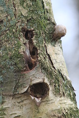 boom (willemsknol) Tags: trees bomen roodborst kampsheide drentslandschap willemsknol