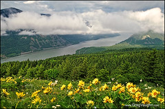 Dog Mountain View (Greg Vaughn) Tags: travel flowers usa west nature weather horizontal clouds america landscape outdoors washington hiking scenic trails nobody american western pacificnorthwest vista flowering wildflowers northwestern hikes columbiarivergorge blooming balsamroot dogmountaintrail springseason nationalscenicarea gregvaughn 0805444