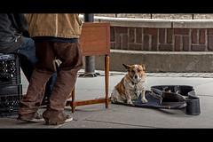 Protector (rg69olds) Tags: dog canon corgi nebraska case omaha protector oldmarket 6d canondigitalcamera flickritis gutiar canonef24105mmf4lisusm beginnersdigitalphotography canoneos6d canon6dusergroup