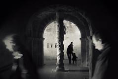 El rbol de la vida (Jos Luis Moyano) Tags: fdv2013