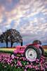 John Deere Pink (Gary Randall) Tags: pink tractor oregon sunrise tulips farm woodenshoe johndeere woodburn dsc87972
