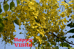 BEST WISHES FOR A HAPPY VISHU (Pappadi) Tags: kerala newyear vishu kanikonna konnapoo taxonomy:binomial=cassiafistula image:content=flower image:color=yellow