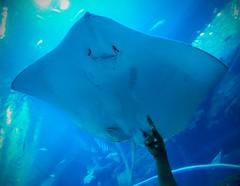 IMG_0927 (shirokami85) Tags: white black animals penguins dubai sony sharks fishes burj rx100 khaleefa