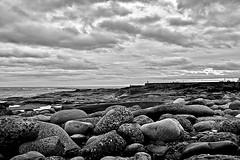 Pebbles (wayman2011) Tags: bw coast seascapes northumberland seahouses canon1dmk11n