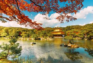 Golden Zen Pavilion ~ Kinkakuji