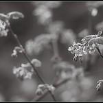 Plant Life thumbnail