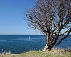 Oceans (by the shore) (Marie Granelli) Tags: ocean tree skne sweden explore d3000