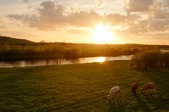 Ruhr idyll (generalstussner) Tags: sunset sky cloud sun tree nature water grass river landscape evening cow warm fuji cows cloudy fujifilm idyll sunrays ruhr ruhrgebiet idylle x100
