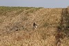 South Dakota Pheasant Hunt - Pierre 12