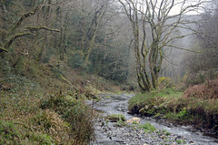 The Valency valley (Salopian07) Tags: wood woodland river cornwall boscastle minsterwood rivervalency