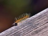 117/365: Caterpillar (Stephen Little) Tags: beercan minolta70210mmf4 minolta70210mm minoltaaf70210mmf4 minoltaaf70210mm sonya77 jstephenlittlejr slta77 sonyslta77 sonyslta77v sonyalphaslta77v