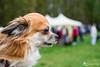 Kleiner Hund, großes Fest