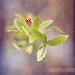 ({Miss Honey}) Tags: green leaves spring dof textures ladybird kerstinfrankart christopherleehewitt