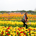 Burnside Tulip Farm 2013-7014.jpg