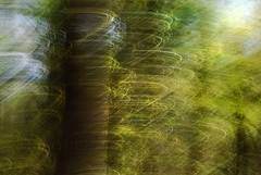 DSC_0816 (lioncourt7) Tags: longexposure light sunlight lightpainting abstract forest lights movement experimental surreal cameratoss lightplay experimentalphotography