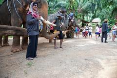 Elephant Trekking (king.arm) Tags: trip travel sea vacation holiday elephant beach water thailand island boat amazing interesting crystal getaway speedboat tuktuk siam longtail krabi aonang