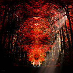 Mystic Autumn / Don't Fear the Reaper* (mrtungsten62-ON/OFF) Tags: autumn trees sunlight holland fall forest canon skull europe reaper magic mirrored sunrays legend topf250 mystic enchanted enchanting dontfearthereaper littlestories picswithsoul mrtungsten62 frankvandongen