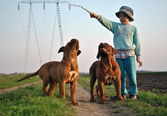 Andrey, Hera & Don (doguedebordeaux1) Tags: puppy doguedebordeaux frenchmastiff