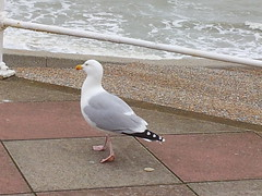 Hastings (PompeyNev) Tags: beach sussex seaside seagull hastings seafront eastsussex