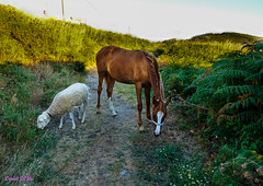 !!! Que buena pareja!!! (loriagaon) Tags: doon cabohome caballo horse loriagaon loria naturaleza nature paisajes landscapes scenery galicia pontevedra espaa animales animals sonydscrx10iii sonyrx10lll rx10lll
