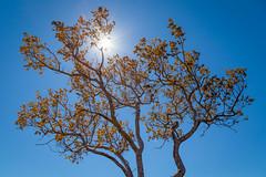 Cerrado amado - Cavalcante | Chapada dos Veadeiros | Gois (ArturDias) Tags: chapada dos veadeiros gois cavalcante cachoeira cachu nature natureza paisagem landscape