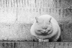 Meditation (Choc') Tags: cat pet animal cute mediation blackandwhite canon canon60d street china beijing asia travel random shots special