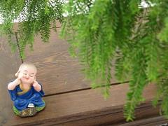 Little Buddha Under a Bonsai Tree (misseka) Tags: singapore singaporegardenfestival2016 singaporegardenfestival plant flower bonsai penjing buddhafigurine