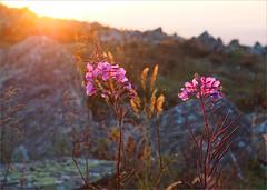 - :) (Kirill & K) Tags: summer bashkiria southernural mountain iremel nature sunrise granite boulder flower sunshine