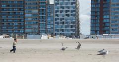 Runing after the seagulls. (Azariel01) Tags: 2016 blankenberge belgique belgie belgium mer sea zee northsea merdunord plage beach strand noordzee mouette seagull enfant child run court buildings batiments