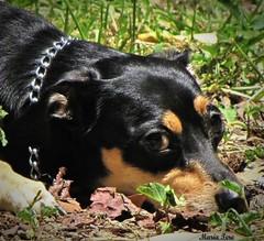 Thrall... (MariaTere-7) Tags: perro thrall mascota caracas venezuela maratere7 amigo
