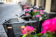 BROOKS and Basket (*Capture the Moment*) Tags: 2016 brooks basket bern berne bicycle bicycleseat blumen bokeh citytrip citywalk fahrrad flowers fotowalk korb leather leder minimalism minimalismus pflanzen sattel vintage bokehlicious handmade summiluxm1450 leitzleica