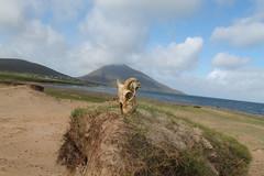 wild west Ireland (philomena plunkett) Tags: skull sheep wildwest mountain