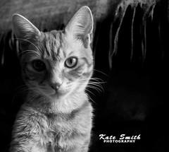 I know I'm cute. (katesmith17) Tags: feline kitty animal eyes nose whiskers pose