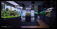 Green Aqua Showroom (viktorlantos) Tags: aquascaping aquascape adahungary aquariumplants aquarium aquascapingshopbudapest aquadesignamano ada plantedaquarium plantedtank plantedaquariumgallery greenaquagallery greenaquahungary növényesakvárium tropicaplants underwaterlandscape underwaterworld beautifulaquarium relaxing healyourspirit healing relaxation chillout displayaquarium showroom