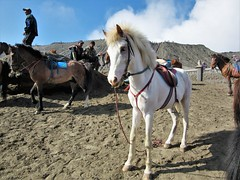 Mount Bromo (SqueakyMarmot) Tags: travel asia indonesia java 2016 kalibaru mountbromo horses