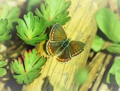 DSC_0209 (La Magie Du Moment) Tags: papillon nature nikon extrieur jardin campagne couleur calme