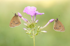 Goodbye Summertime... (Zbyszek Walkiewicz) Tags: sony sunrise closeup macro morning coth butterflies butterfly coth5