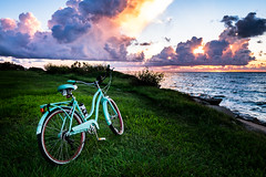 Aqua Bicycle (Daniel Ray) Tags: animal bird galveston seabrook bay gully park pine sunrise