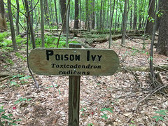 Poison Ivy (Birame) Tags: folderpublishingstatus flickr signs hiking westhartford connecticut unitedstates us