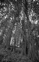 WM 09 (pachecofoto) Tags: bosquelahoja heredia costarica