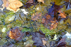 Swamp Colors (B.G.Schultz-Photography) Tags: leaves nikon swamp algae cuyahogavalleynationalpark cvnp d7000