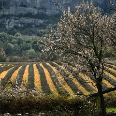 spring in Vaucluse (pierre hanquin) Tags: light sun france color colour tree nature colors field landscape geotagged spring nikon europa europe colours couleurs champs arbres fields provence paysage landschaft arbre printemps couleur 1685 lubéron 1685mm d7000 1685mmf3556gvr hanquin