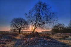 Skipwith Common (inreflection) Tags: trees tree nature sunrise landscape nikon frost nef sigma sunburst common northyorkshire sigma1224 skipwith nikoncapture escrick nikondslr nikond600 skipwithcommon sigma1224f4556mkiidghsm