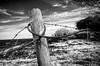(Damien Cox) Tags: uk sky blackandwhite bw field fence mono nikon grayscale barbwire damiencox dcoxphotographycom