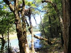 D'Urville Hut to Morgan Hut Nelson Lakes (Janr20) Tags: newzealand lake nelson nz tasman bluelake constance nelsonlakes waiaupass lakerotoroa starnaud traverssabine mtcedric morganhut speargrasshut traverssabinecircuit mosspass sabinehut durvillehut sabinetrack tiraumeatrack westsabine