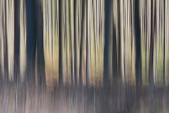 Spring forest (Monique vd Hoeven) Tags: trees movement belgie ardennen bos icm voorjaar thierache woold intentionalcameramovement regniessart